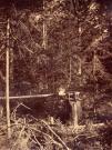Log dead fall trap