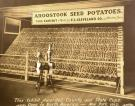 Seed potato display, Houlton, 1912