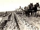 Ralph R. Tilley Farm, Garfield Plantation