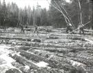 Pine log drive on Machias River, Ambajejus, ca. 1950