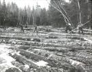 Pine log drive on Machias River, Ambajejus, ca. 1950