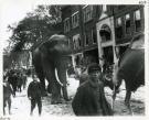Circus Parade, Main Street, Biddeford  1910