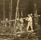 Cutting down trees, Fairfield, ca. 1920