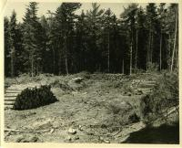Managed clear cutting, MacMahan Island, 1957