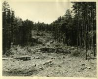 Forest fire lane, MacMahan Island, 1957