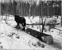 Yarding logs, Norway, 1939
