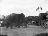 Elephants marching in the Society Circus parade, Kennebunk, 1915