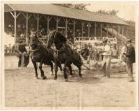Horse pulls at Community Park, Houlton. ca. 1940