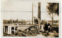 Reviewing tree seedlings, Troy, ca. 1940
