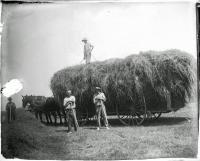 Haying on the Ingraham farm, Hodgdon, ca. 1900