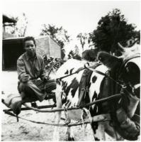 Pvt. Florentino Lopez with steer, North Yarmouth, 1942