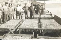 Herring drying, 1917