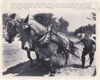 Horse pull, Ossipee Valley Fair, 1982