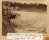 Salmon Jumping at Caribou Dam, c. 1900