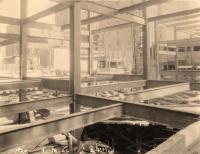 Steel frame, Eastland Hotel, Portland, 1926