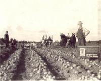 Roscoe Burtchell Farm, Fort Fairfield