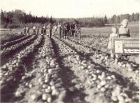 Lloyd Wright farm, Ashland, ca. 1937