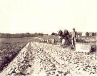 O.O. Blackden Farm, Westfield