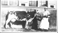 Lilian Washburn at Norlands with cow, 1900