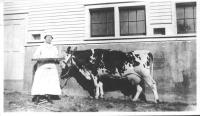 Lilian Washburn and cow at Norlands, ca. 1900