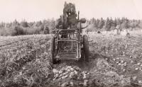 Horse drawn potato digger