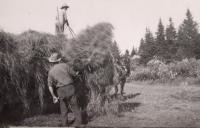 Loading hay, Caribou, ca. 1940
