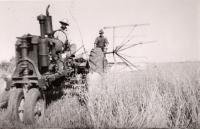 Grain binder, Caribou, ca. 1940