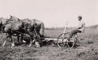 Mowing hay, Caribou, ca. 1940
