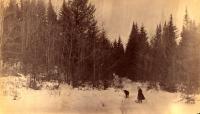 Pearce Woods, Houlton, 1890