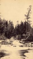 Old Pine on East Hastings Brook, 1892