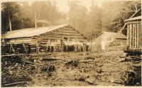 Camp No. 7, Chesuncook Lake, 1911