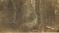 Woods Road, 1891
