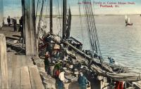 Fishermen baiting the trawl lines, Portland, ca. 1906