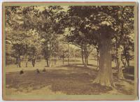 Deering's Woods, Portland, 1878