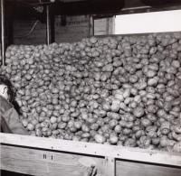 Potato processing storage bin, Aroostook County, ca. 1960