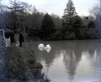 Swans, Evergreen Cemetery, Portland, 1901