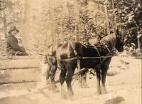 R. Nadeau with an Elmer Bryson team, c. 1895.