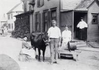 Woman milking cow, Sanford, ca. 1905