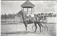 Horse and buggy, Fryeburg Fair, ca. 1900