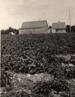 J. A. Forsman farm, New Sweden, ca. 1922