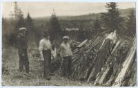 Inspecting slash pile, Stockholm, ca. 1930