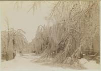 Carleton Street, Portland, 1886