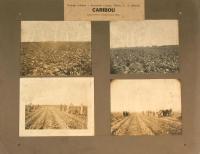 Nylander samlat 17, Caribou, 1922