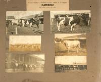 Nylander samlat 18, Caribou, 1922