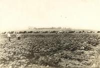 Farm laborers, Presque Isle, 1917