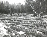 Pine log drive on Machias River,  ca. 1950