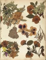 Collage of pressed flowers, ca. 1846