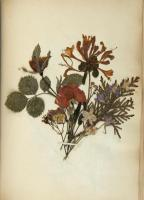 Pressed flower bouquet, 1851