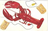 Maine Lobster postcard, ca. 1920