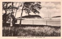 Birches on the Shore Path, Bar Harbor, ca. 1920